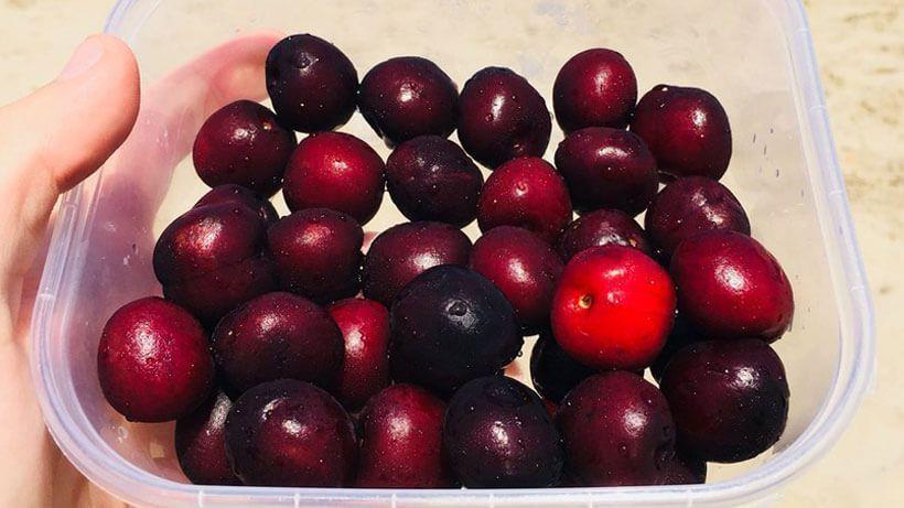 fruta para combatir la obesidad