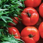 Descubriendo las gamas vegetales