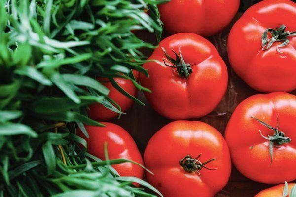 Descubriendo las gamas vegetales 21