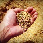 Celiaquía, alergia al trigo y sensibilidad al gluten: ¿en qué se diferencian?